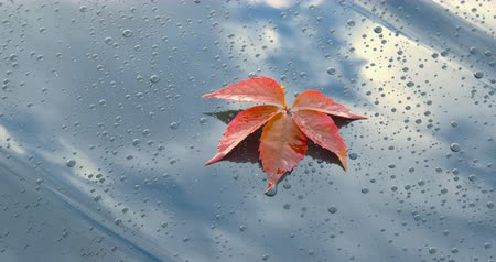 Sequence - beautiful autumn leaves lying on the polished bonnet of a car - Sequence of three different shots - ProRes Стоковые видеозаписи