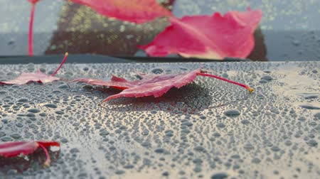 After an autumn rain - beautiful autumn leaves, lying on a clean car - panning and zooming camera - ProRes