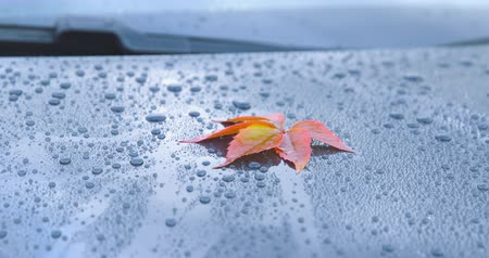 A beautiful autumn leaf lying on the polished hood of a car - camera pan - ProRes Стоковые видеозаписи