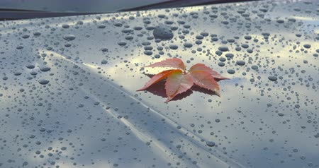 motorháztető : A beautiful autumn leaf lying on the polished bonnet of a clean car - tilting camera - ProRes