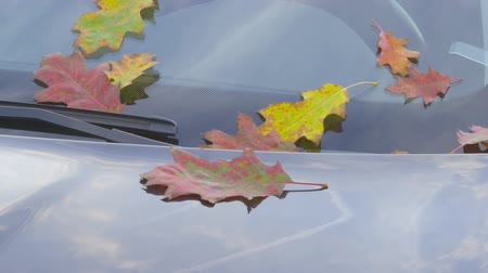 Autumn - sequence - beautiful autumn leaves on a clean a car - sequence of three different shots - ProRes