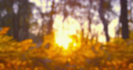 Autumn Impressions - intentionally completely defocused video showing an autumn landscape - sunset - seamless loop - ProRes Stock mozgókép