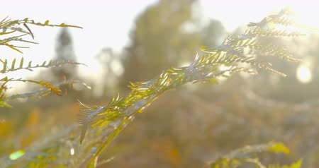 profundidade de campo rasa : Autumn Impressions - beautiful autumnal television in the backlight - camera pan - ProRes Stock Footage
