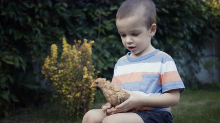 ducky : footage farm boy holding a small chick in the hands outdoor.