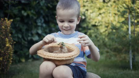 patinho : footage farm boy holding a small chick in the hands outdoor.