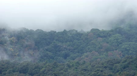 pui : Time-lapse footage of the cloud movement on the tropical rain forest in the late afternoon on Doi Suthep-Pui, Chiang Mai