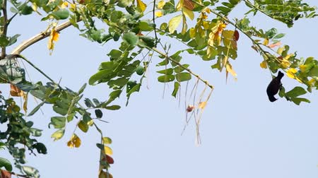 sunbird : sunbird is flying from branch to branch of plant in order to find a food