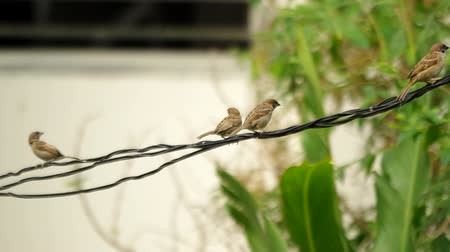 small group of animals : sparrow are resting on the moving electric line and fly away