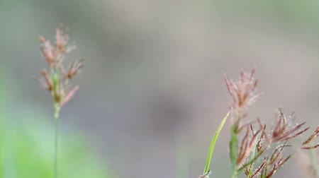 фокус : rack focus of the grass flowers in the field