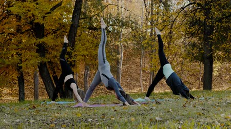 soul : Group of Young women doing Yoga action exercise healthy in the park. Health lifestyle concept.