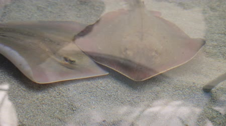stealth : Sting rays and a sand shark