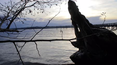 driftwood : pan tree to pier sunset