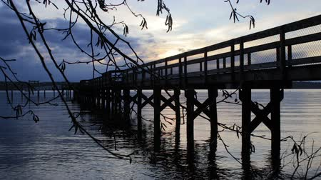 wooden bridge : Over pier behind branch