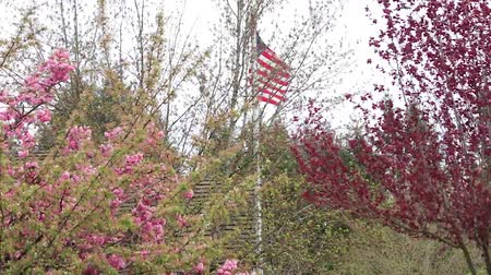 usa independence day : usa flag and cherry blossoms