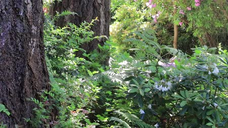 rhododendron : sprinkler watering over fern and undergrowth