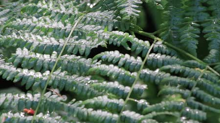 ferns : panning down wet ferns till bee lands