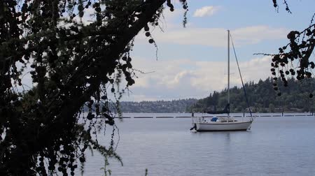 északnyugati : pine branches and sailboats along the shore of lake washington
