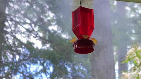 hummingbird : smoke behind humming bird feeder