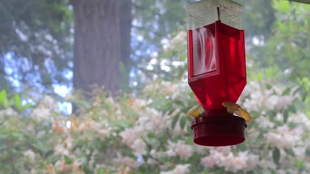 hummingbird : smoke and rhododendron behind feeder