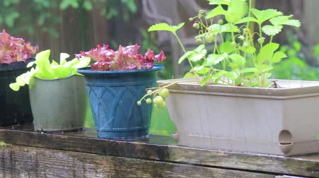 ogrodnik : slow motion potted plants in the rain