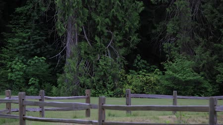кедр : wooden fencing along grassy pasture in washington state