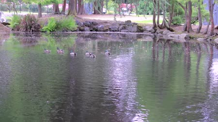 parte : park pond with ducks