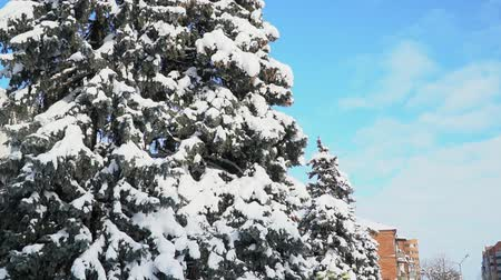 snowy day blue sky pine tree in snow city christas day Wideo