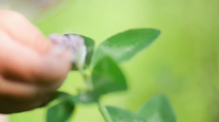 macro fotografia : A close up photo of a baby hand touching flowers and plants, natural exploring childhood HD