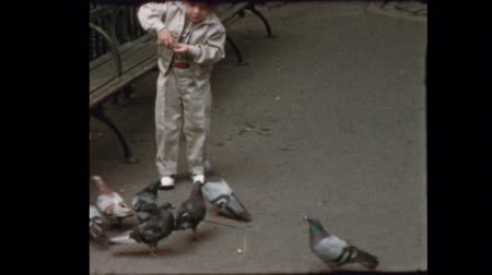 bird learning : Cute blond boy feed pigeons in NYC park 1956 Stock Footage