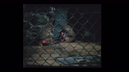 cloture : Bébé singe et parents au zoo