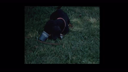 köpek yavrusu : 1958 Family Dog gets snout caught in cup Stok Video