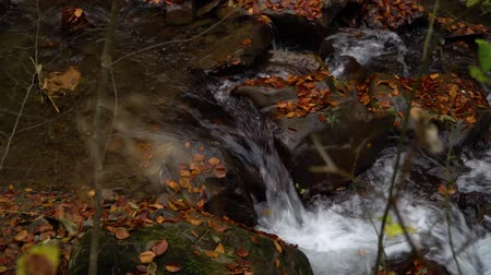 opadavý : Autumn forest. Forest in the mountains. Mountain river. Stream with cold water. Dostupné videozáznamy