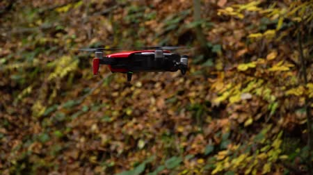 spion : Quadcopter in de lucht. Quadcopter maakt video's in het herfstbos. Stockvideo