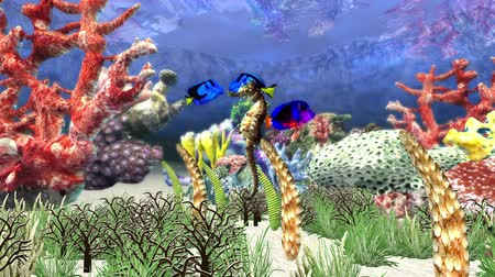 tropical : aquarium