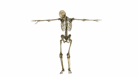 csontváz : dancing skeleton