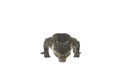 crocodilo : 3D CG rendering of Crocodile
