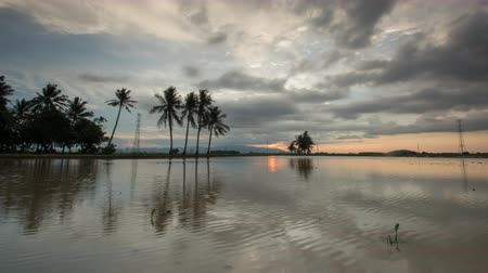 kokosový ořech : Timelapse raining cloud over the coconut trees,