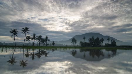 refletindo : Timelapse white cloud moving across coconut trees and hill Bukit Mertajam.