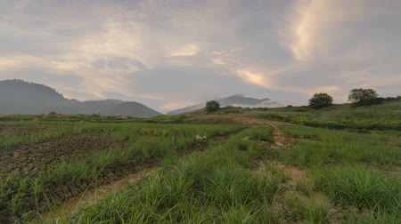 rural area : Timelapse green wet land with leading path towards the hill at Bukit Mertajam.