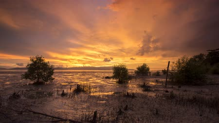 mangue : Time lapse sunset at mangrove swamp at Juru, Pulau Pinang, Malaysia. Background is the city Penang island.