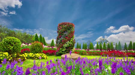 landscaping rocks : Beautiful flower garden in winter in northern Thailand. Stock Footage