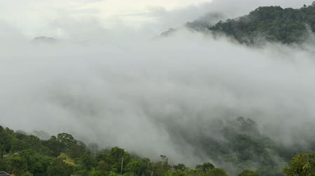 enevoado : Morning fog in dense tropical rainforest,Timelapse