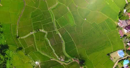 rotate shot. aerial view birds eyes view shot on a rice field. Rice farm Map 4K DCI
