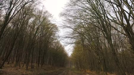 stabilizátor : Full HD footage of a hike through the forest in the early spring. Stabilized and smooth the DJI Osmo.