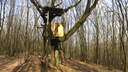 ohař : Box stand hunting in the forest in Slovakia During early spring. Using of glidecam. Dostupné videozáznamy