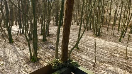 polowanie : Box stand hunting in the forest in Slovakia During early spring. Using of glidecam. Wideo