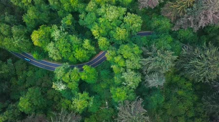 ağaçlandırma : Top View of a Road Zigzagging Around Lush Vegetation of a Forest