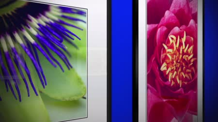 Video Showing Plants And Flowers In Frame