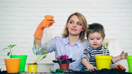 близость : The son and mother planted flowers in pots making a common cause Стоковые видеозаписи