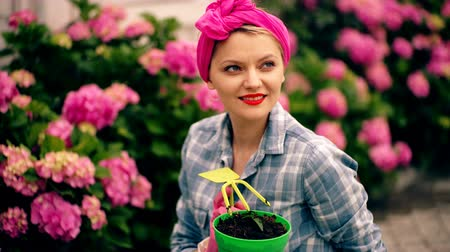 autêntico : Woman in flower garden cares for flowers. Concept of care for plants. Charming country house with flowers. Attractive woman with a pink handkerchief cares for hydrangeas. Stock Footage